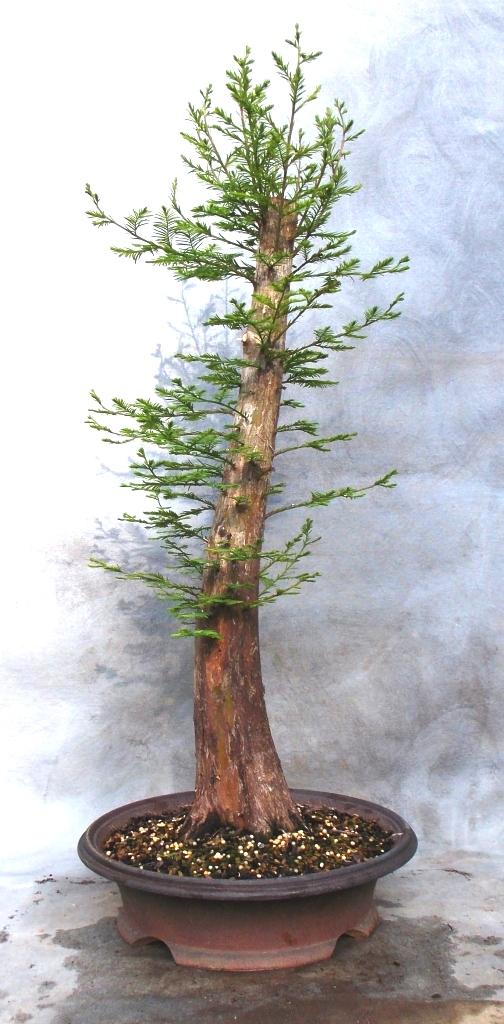 Cypress4-17-15-4